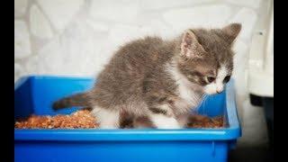 У котенка понос: что делать? Часть 5