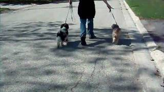 Alpha Dog Foster: Marley And Puddles Meet