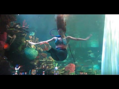 FREE in LAS VEGAS - Mermaid Show at Silverton Casino Aquarium