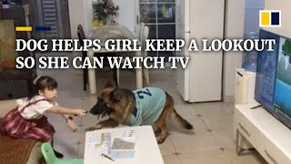 Partners in crime: Dog in China helps girl keep a lookout so she can watch TV