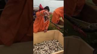 видео Способы ловли барабули в черном море