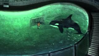 My Orca