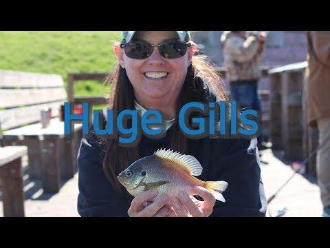 Shore Fishing For Huge Blue Gills..Montello Wi