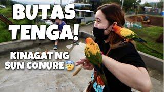 BINUTAS NG SUN CONURE ANG TENGA NI @Tita Joy Vlogs!! Kilalanin si tita Joy ng lahat!! | Murillo Bros