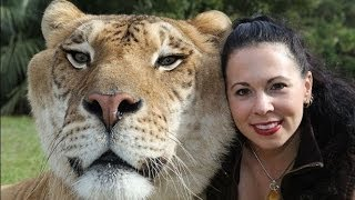 My Huge Pet Liger - Crazy Cats Compilation of Funny Pets & Funny Cat Videos