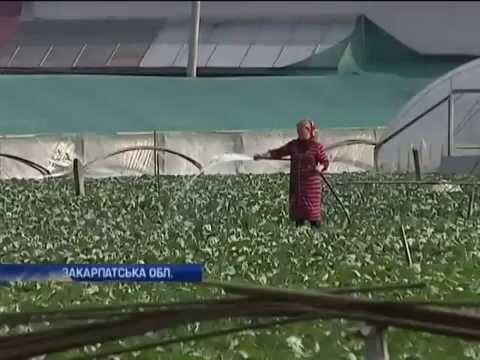 Закарпатское село 'поднялось'