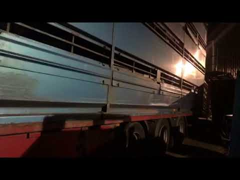 Sheep Delivery At A J Meats In Birmingham