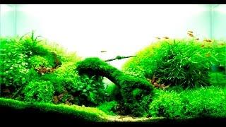 HOW TO BUILD a cheap planted high-tech nature aquarium, aquascape