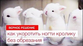 Как укоротить ногти кролику без обрезания