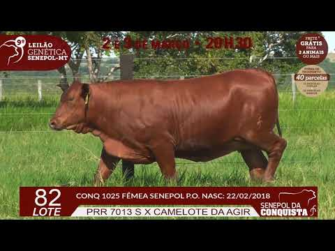 LOTE 82 CONQ 1025