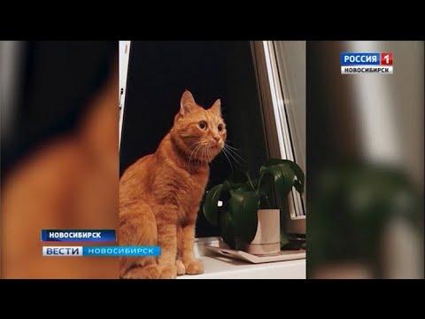 Вопрос: Кого наказать, если собака убила моего кота?
