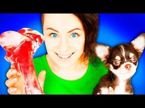 Маленький щенок и ГИГАНТСКАЯ кость! ЧТО ЕСЛИ СОБАКЕ ДАТЬ КОСТЬ ГИГАНТ? Собаки ругаются Magic Family