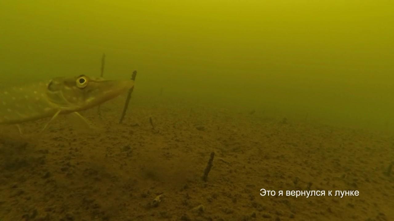 подводная рыбалка на маныче
