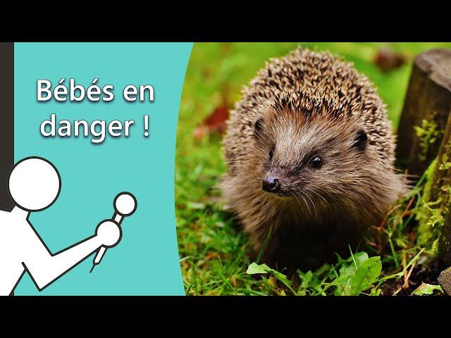 Bébés en danger - Les Secouristes de la faune sauvage #2