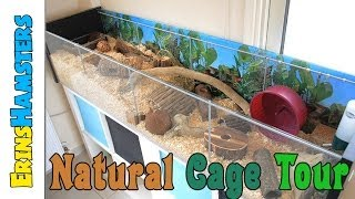 Natural Themed Hamster Cage