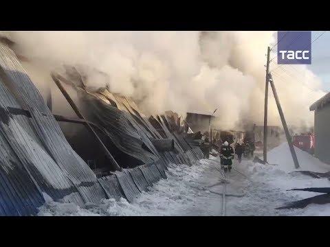 Смотреть Что известно о пожаре под Новосибирском онлайн