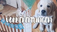 VORBEREITUNGEN | Labrador Retriever Welpe BRUNO zieht ein | Throwback #1 Hund