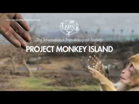 PROJECT MONKEY ISLAND: Quick Overview - Helping Punta Santiago Rebuild