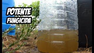 como hacer un potente fungicida casero remedios orgánicos la huerta de ivan