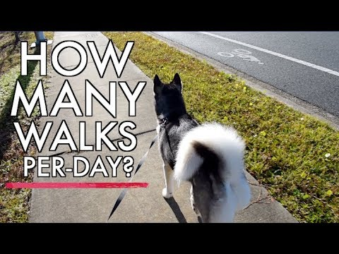 how-much-exercise-does-a-husky-need?