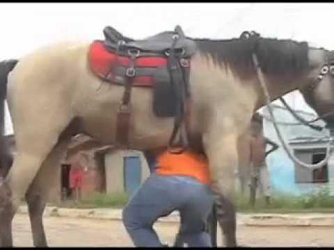 O cavalo e o bebado.