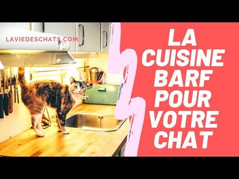 J'ai Testé La Cuisine BARF Pour Chat 🐱