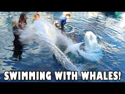 Swimming with Dolphins, Sea Lions & Who Likes a Whale?  Totally TV
