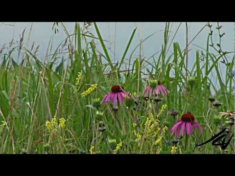 Travel Nebraska  HD - YouTube