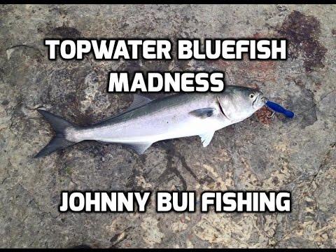 Topwater Bluefish Madness, NJ, 5/26/16