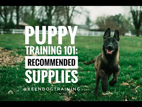 Puppy Training 101: Recommended Supplies