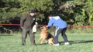 Zamp Von Der Urbecke - Nass 2010 - Protection Work