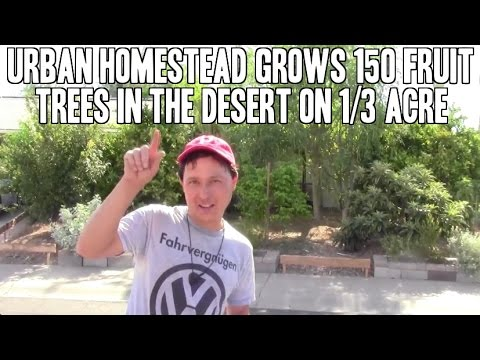 Urban Homestead Grows 150 Fruit Trees in the Desert on 1/3 A
