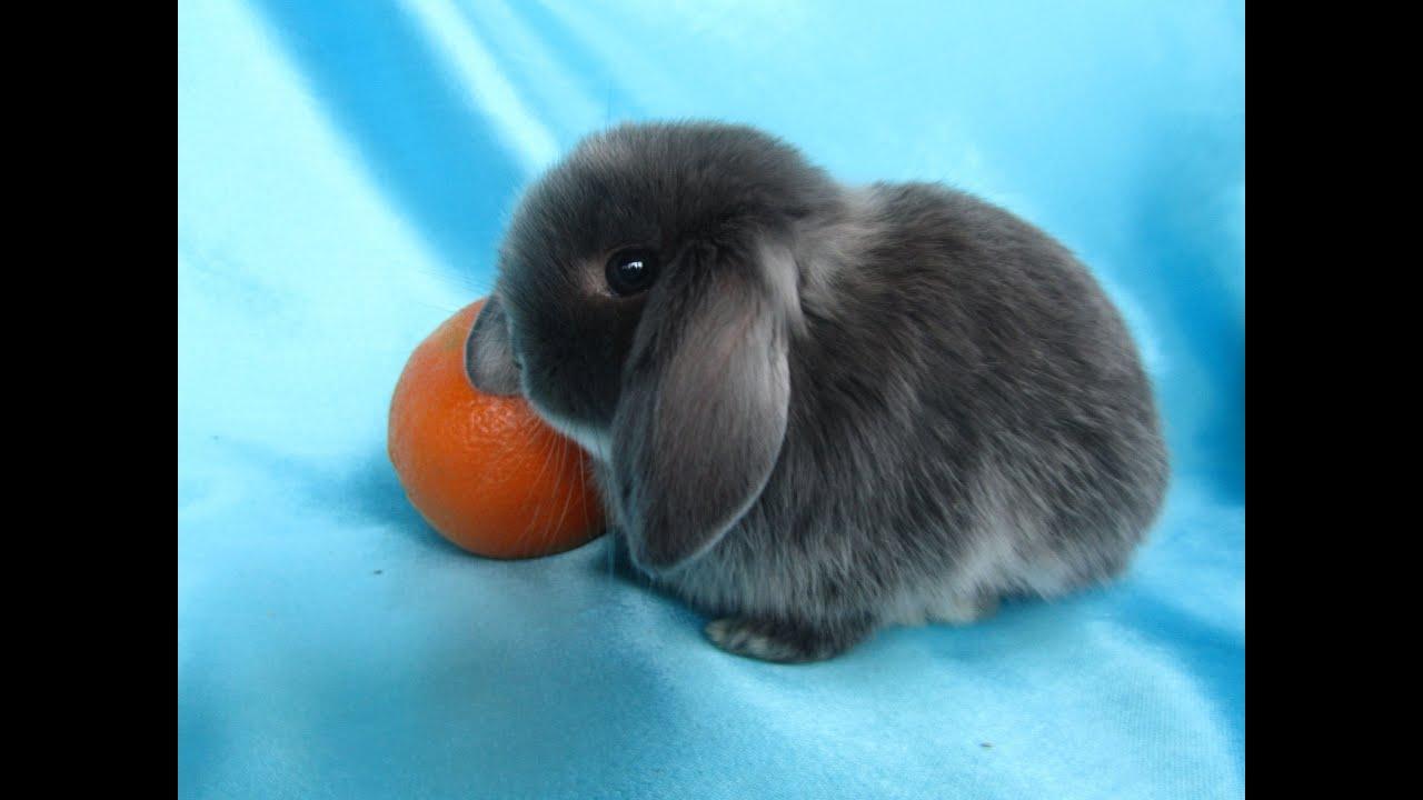 Забавные крольчата. Разведение кроликов как бизнес идея. Много .