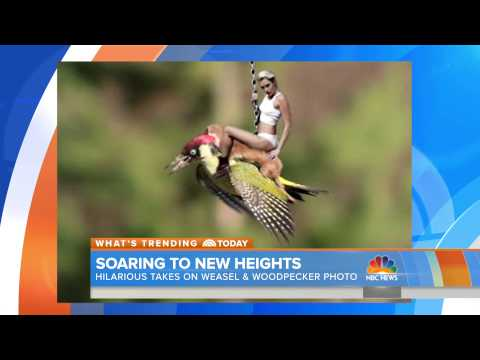 Miley Cyrus Rides #WeaselPecker | TODAY