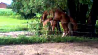 Repeat youtube video wallach besteigt pony