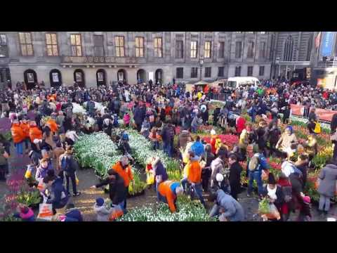 Tulpenpluktuin 2017 in Dam Square Amsterdam - National Tulip Day