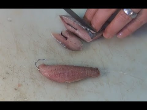 BAITS - Sardine Fillet & Bloody Bomb Bait For Kob & Edible Fish