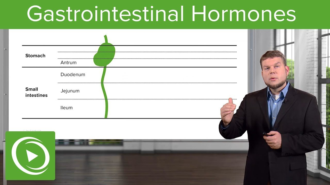 Gi Hormones: Gastrointestinal System – Physiology | Lecturio
