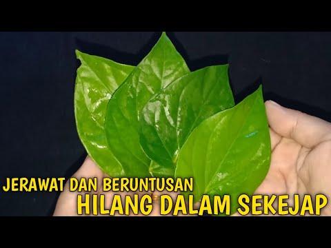 cara-menghilangkan-jerawat-secara-alami-menggunakan-daun-sirih