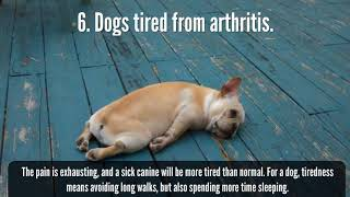 Natural Dog Joint Supplement For Dogs With Arthritis Pain