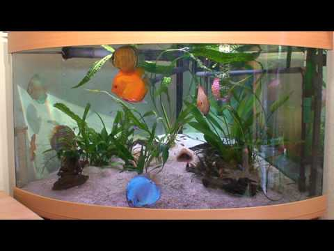 Diskus 360 l aquarium youtube for Diskus aquarium