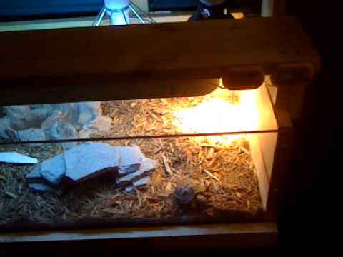 & Baby Russian Tortoise Habitat Enclosure - YouTube azcodes.com