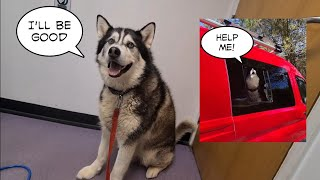 Husky visits the Vets and promises not to Embarrass me!