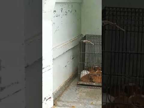 פקחי עיריית ירושלים לוקחים גורי כלבים מאמם לצורך הרדמה