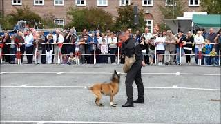 Was Polizeihunde alles können