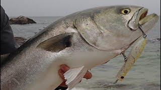 Jumbo Surfcasting Bluefish Crushing Poppers