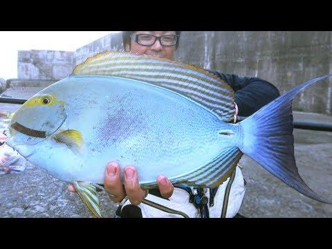 堤防�起�一発目�良型�魚を釣り上�る�[那覇一文字�1泊2日釣り#2]