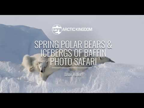 Spring Polar Bears Icebergs of Baffin | Webinar