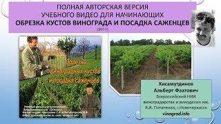 Учебный фильм Обрезка винограда и посадка саженцев, 2011 г., Хисамутдинов АФ