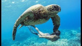 PADI Learn to Freedive